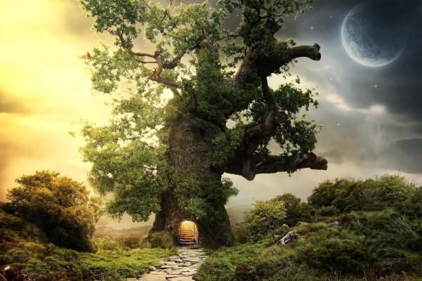 Camino hacia el interior del árbol