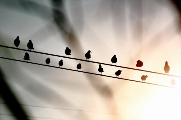 Pájaros sobre los cables