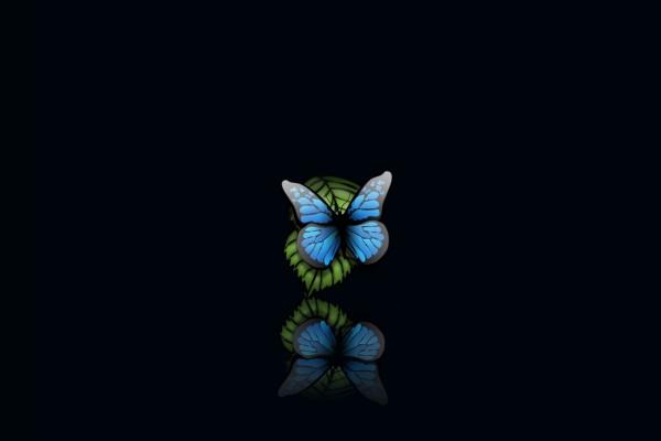 Mariposa sobre una hoja