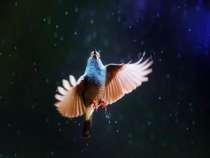 Postal: Pájaro bajo la lluvia, con las alas extendidas
