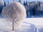 Un bonito árbol blanco, en la nieve