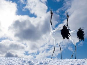 Postal: Aves mirando al cielo