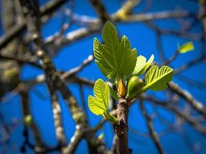 Brotan los árboles en primavera