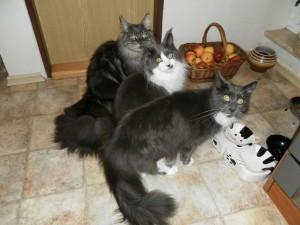 Tres gatitos esperando la comida
