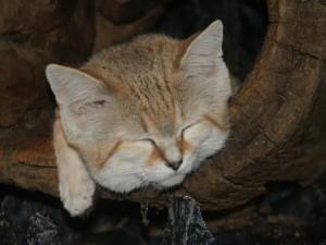Gatito dormilón