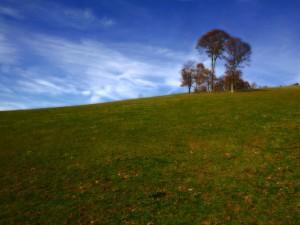 Postal: Árboles en la verde colina