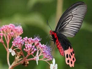 Postal: Mariposa sobre las flores