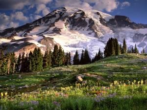 Flores en el prado, junto a la montaña