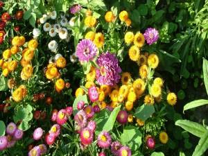 Postal: Flores y plantas en el jardín