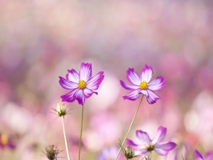 Postal: Lindas flores en el tallo