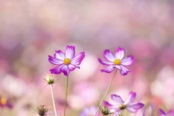 Lindas flores en el tallo
