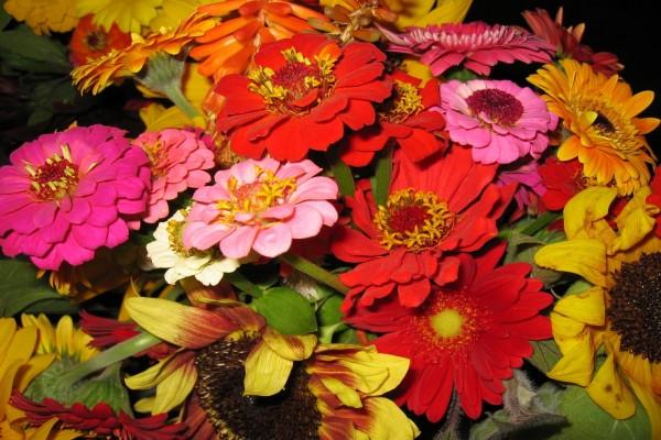 Flores de gran tamaño, y varios colores