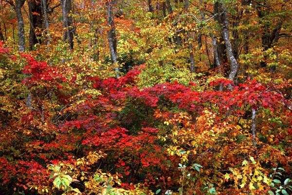Árboles y arbustos en otoño
