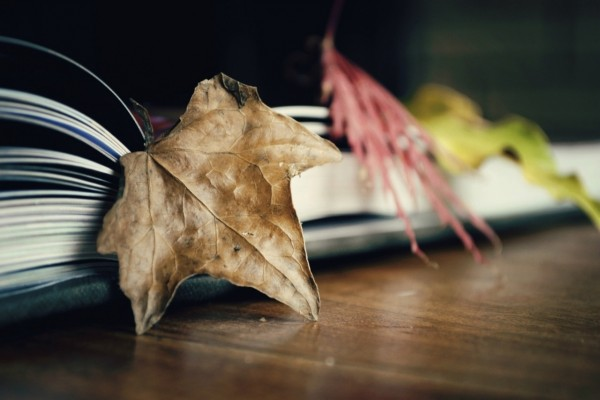 Hojas secas y un libro