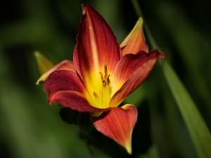 Postal: Flor roja y amarilla