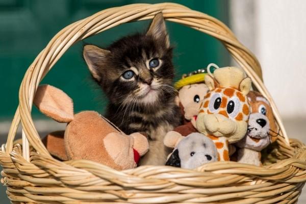 Gatito en una cesta con peluches