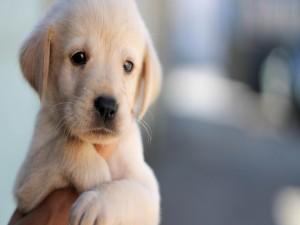 La mirada triste, de un perrito blanco