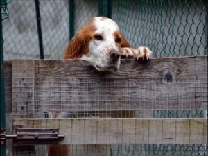 Postal: Perro triste, tras la valla
