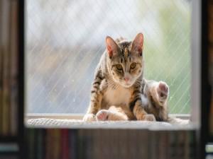 Postal: Gato junto a la ventana