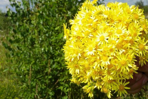 Ramo de flores amarillas