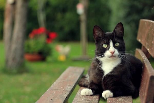 El gato sobre un banco