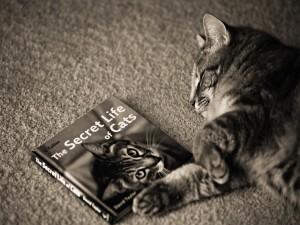 Postal: Gato dormido, junto a un libro de gatos