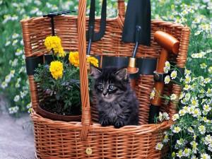 Gatito en la cesta con las flores