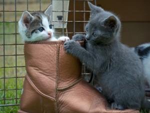 Gatitos jugando en una bota