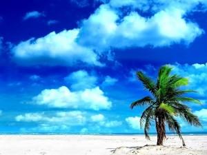Postal: Palmera solitaria en la playa