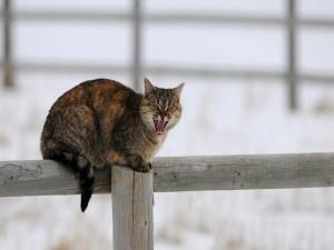 Un gato enojado