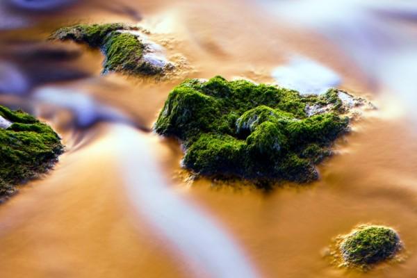 Piedras con musgo