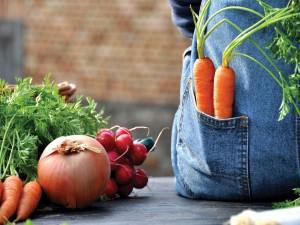 Postal: Vegetales recién recogidos del huerto