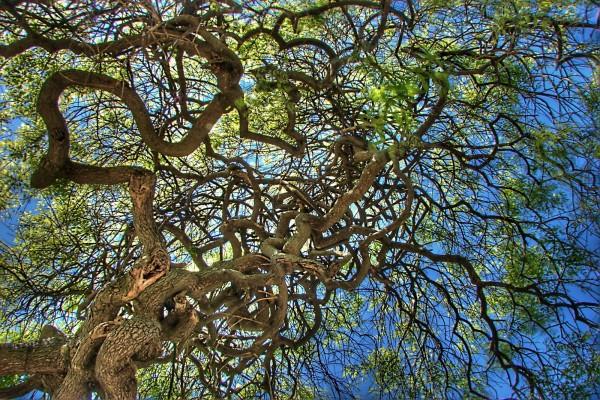 Árbol con ramas rizadas