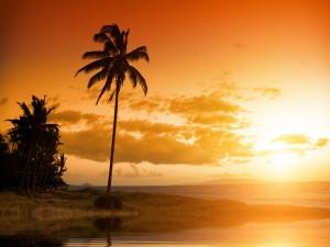 Postal: Amanecer en Hawái