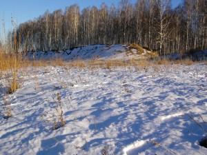 Postal: Nieve y árboles, en un frío invierno