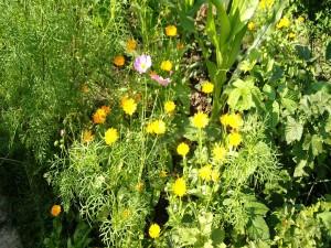 Florecillas silvestres, rosas y amarillas