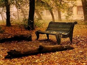 Postal: Paisaje en otoño, con hojas caídas