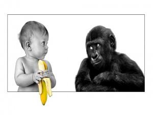 Postal: ¿Me das un poquito de banana?