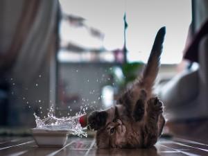 El gato tropezó