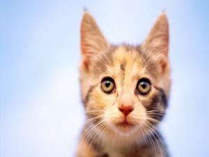 La carita de un gato