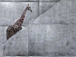 Postal: Jirafa en las escaleras