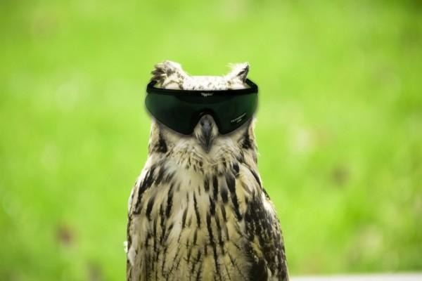 Un búho con gafas de sol