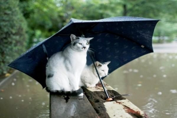 Gatos bajo el paraguas