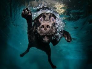 Perro buceando