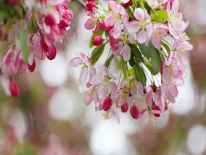 Postal: Hermosas flores rosas