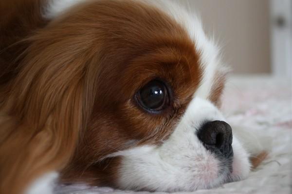 Cara de un perrito