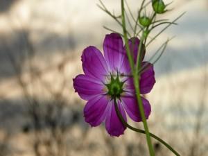 Postal: Rama con una flor color lila