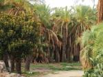 Palmeras, en un parque de Italia