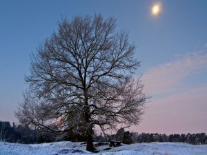 Un banco junto al árbol, en un lugar nevado