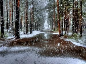 Postal: Cae la nieve, sobre los árboles y el camino